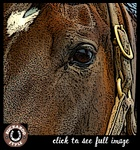 """Fabulous Filly Fronts the Fence"" Giclee Canvas 2005 Buckaroo Style"